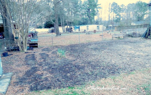 My perennial and vegetable garden before photo