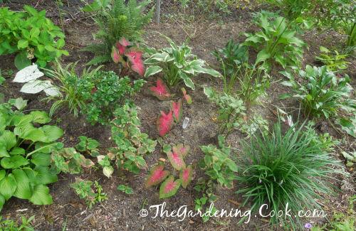 Sjade garden in the early days.