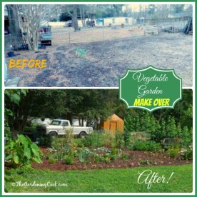 See how I transformed my eyesore garden bed into a combined perennial vegetable border