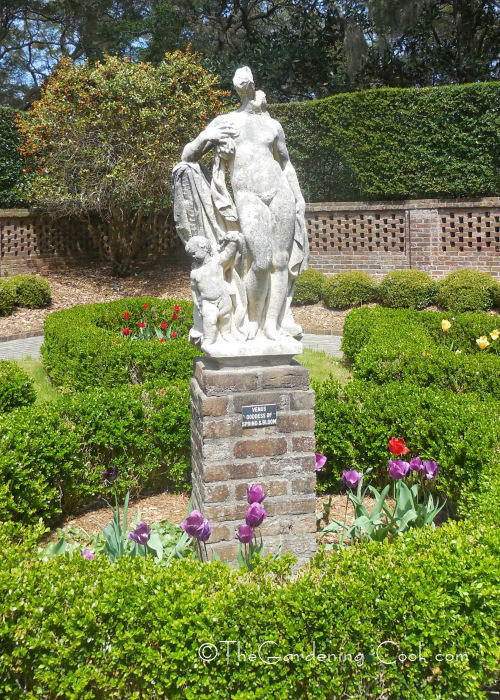 Venus - the goddess of spring and bloom