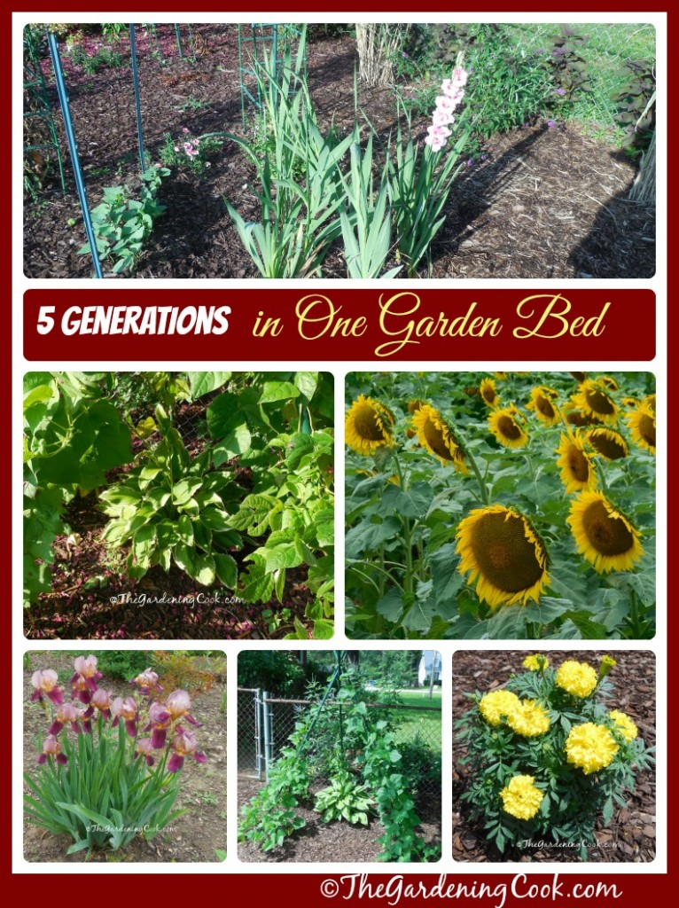 A tribute to my family - 5 generations in one garden bed - thegardeningcook.com/5-generations-one-garden-bed