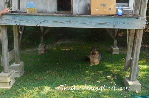 Shady spot under the playhouse