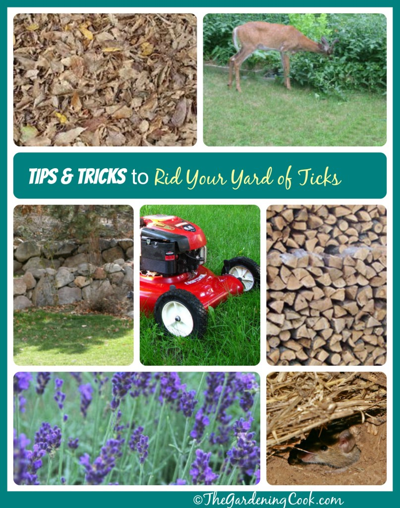 Tips and Tricks to Rid  your Yard of Ticks