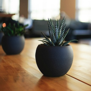 Indoor Plants Category