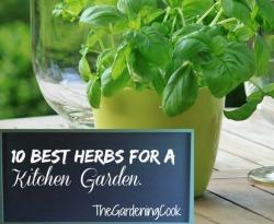 Best herbs for a kitchen garden