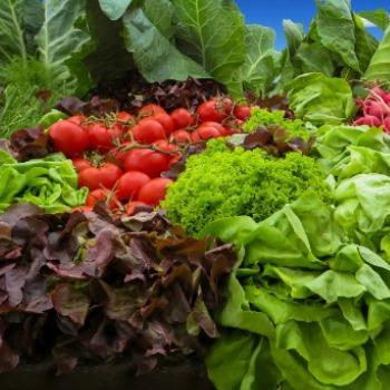 Vegetable Gardening Category