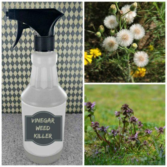 Organic Vinegar Natural Weed Killer