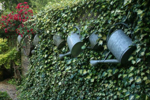 Using watering cans on a hedge as garden art