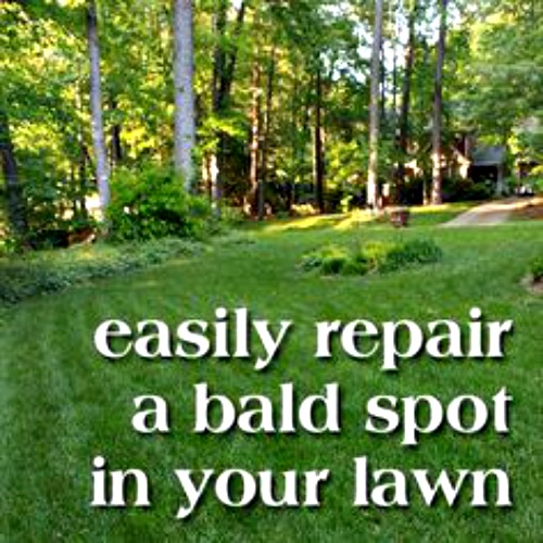 Patch a bare spot in your yard
