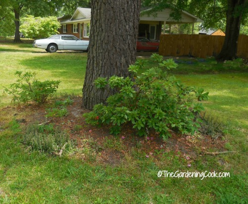 Budget Front Yard Make Over and a Summer Garden Blog Hop The