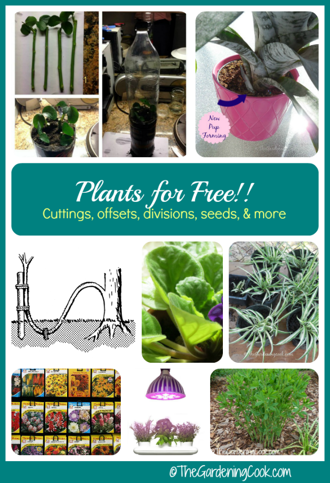 How to grow plants for free - plant propagation tips - thegardeningcook.com/plant-propagation-tips