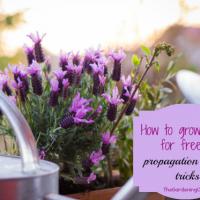 Plant propagation tips - thegardeningcook.com/