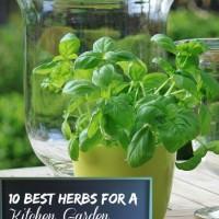 10 Best Herbs for A Kitchen Garden - thegardeningcook.com/