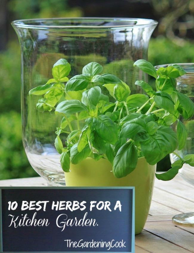 10 Best Herbs for Kitchen Gardens - thegardeningcook.com/10-best-herbs-for-kitchen-gardens