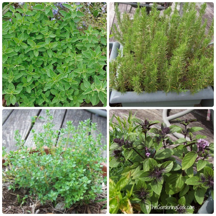 A cook's herb garden. Find out how to grow fresh herbs like basil, oregano, rosemary and thyme.