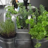 Kitchen garden herbs