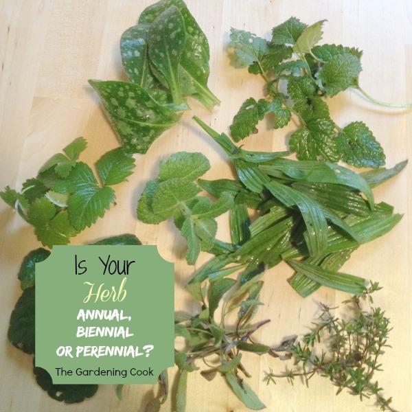 Is your herb Annual, biennial or perennial?
