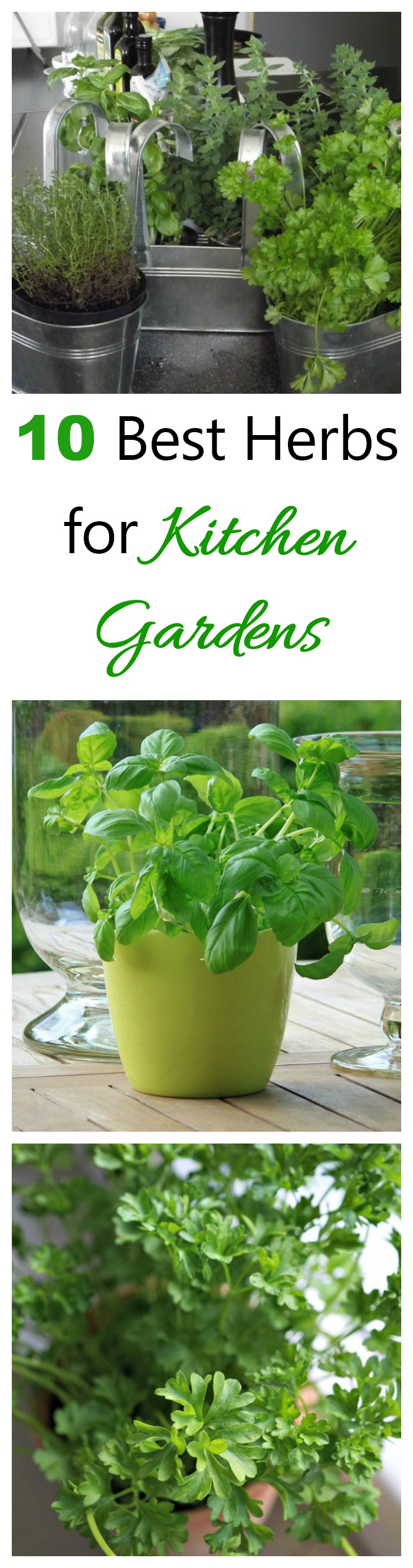 These are the best herbs for kitchen gardens. All can be grown as indoor plants year round.