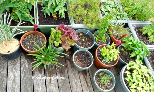 11 Tips for Growing a Vegetable Garden on a Deck The Gardening Cook