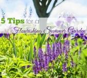 5-tips-flourishing-summer-garden-main