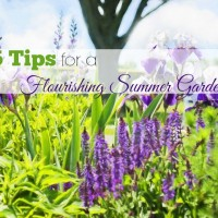 5-tips-flourishing-summer-garden-main