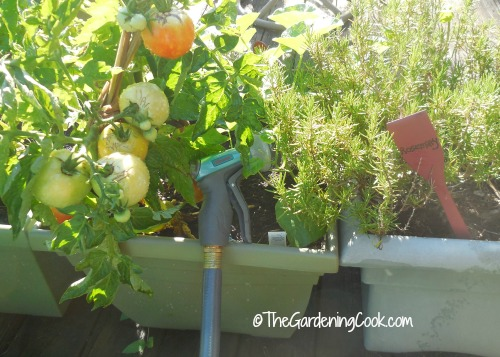 Flexogen hose and watering nozzle makes vegetable gardening a breeze