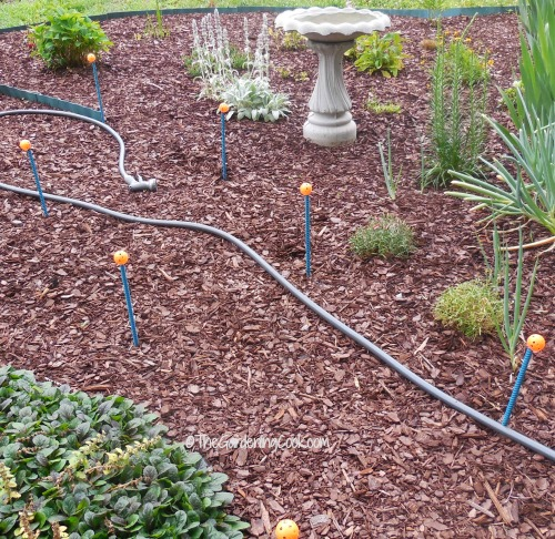 Landscaping Diy Guides : Diy hose guides easy gardening project the cook