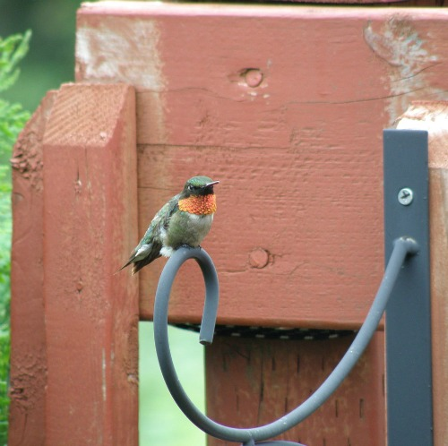Be sure to have some perches for hummingbirds