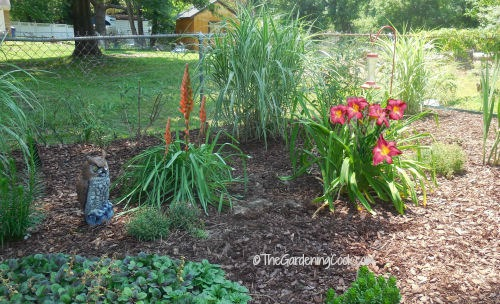 Red hot pokers and Vols day lilies