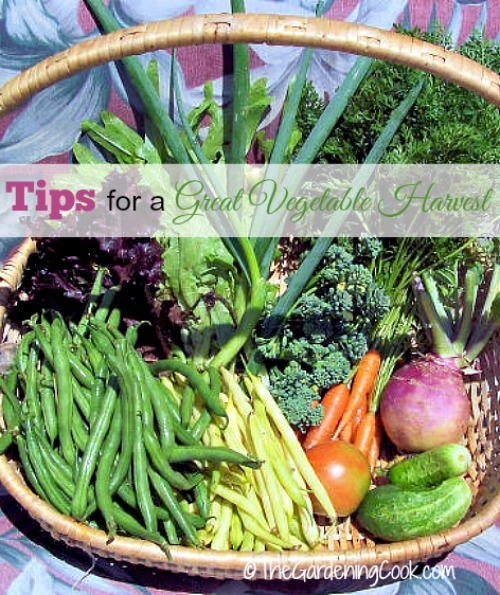 30 Tips for a Great Vegetable Garden Harvest Plus 6 Garden Recipes