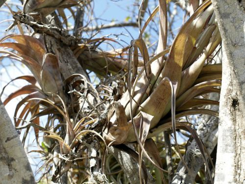 air plants often grow in trees so they like good circulation