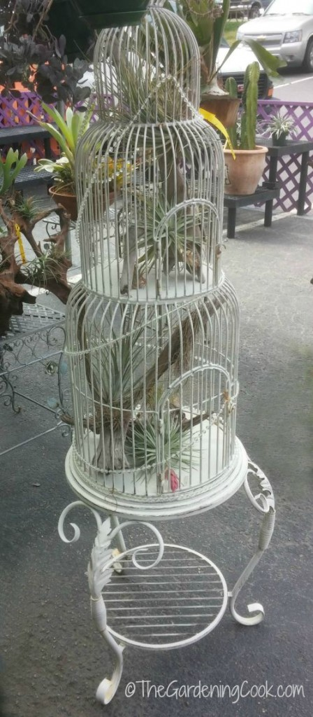 Air Plants look right at home in bird cage planters