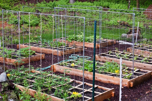trellises are easy to add to raised beds.
