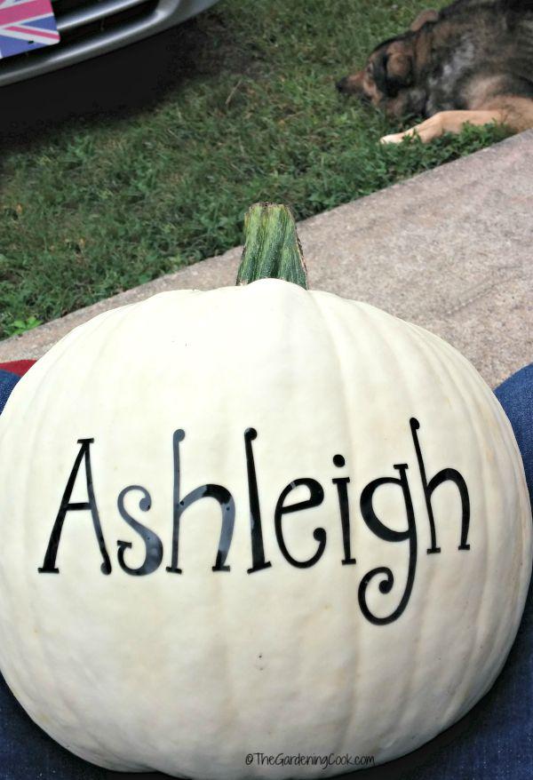Ashleigh decal