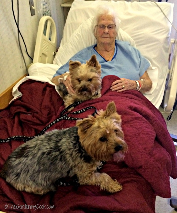 Jake and Charlie with my mother in one of her last hospital visits.