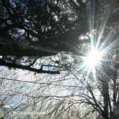 Sun peeking through the frozen trees in North Carolina
