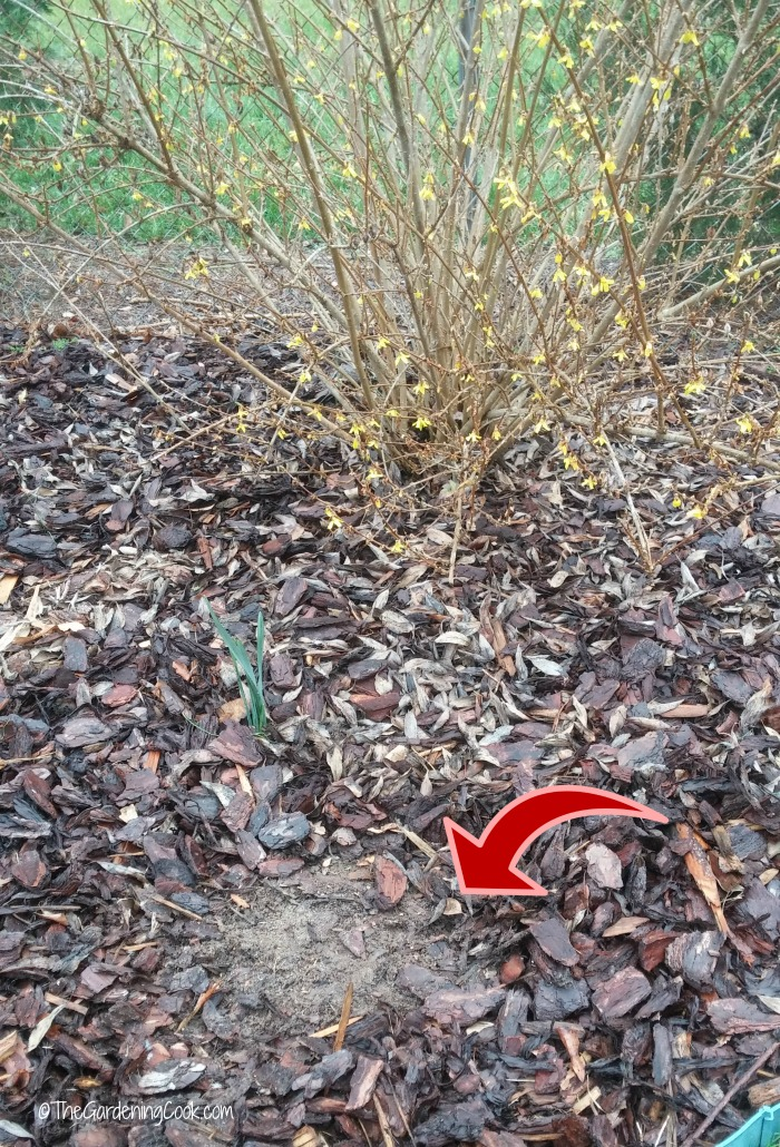 Top up mulch on bare spots in garden beds