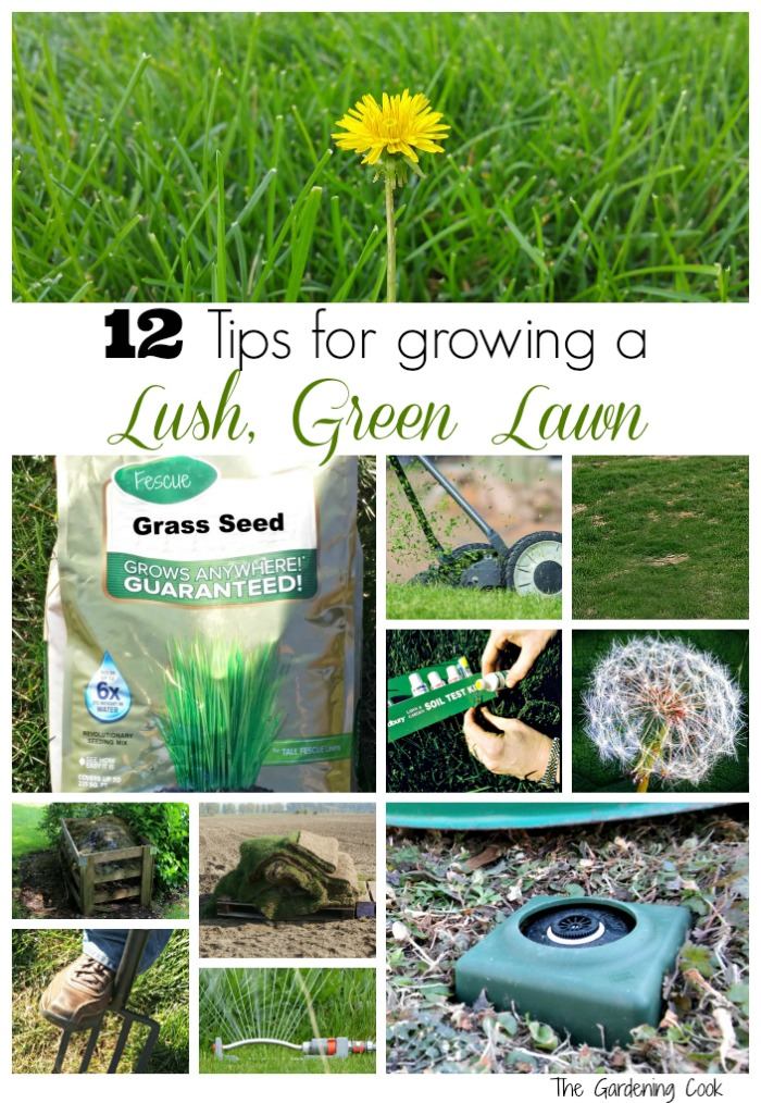 lawn care tips   tricks for a lush green long all summer, Natural flower