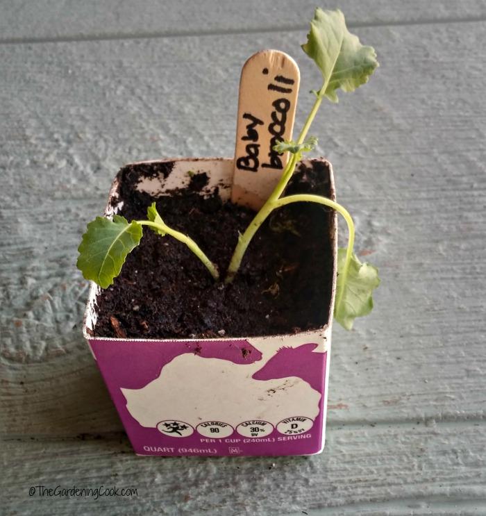 Milk carton planting pot