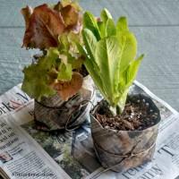 DIY newspaper seed pots