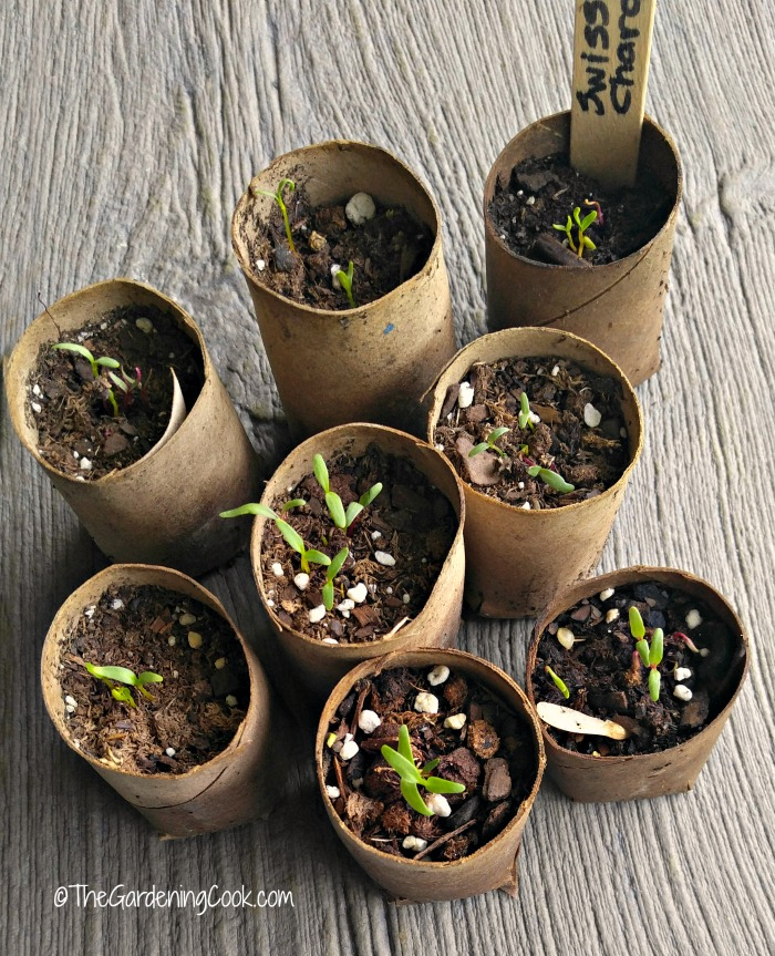 Wrapping paper cardboard tube seed starters