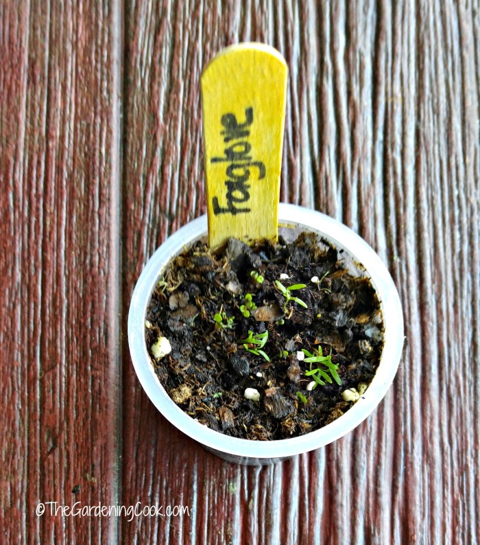 Jello and pudding cups can be used to start seeds
