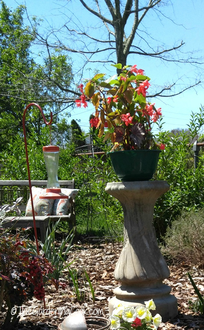 Re-purposed birdbath becomes a garden plant stand