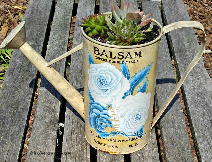 Watering can planter with succulents