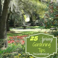 Garden Tips for Sping