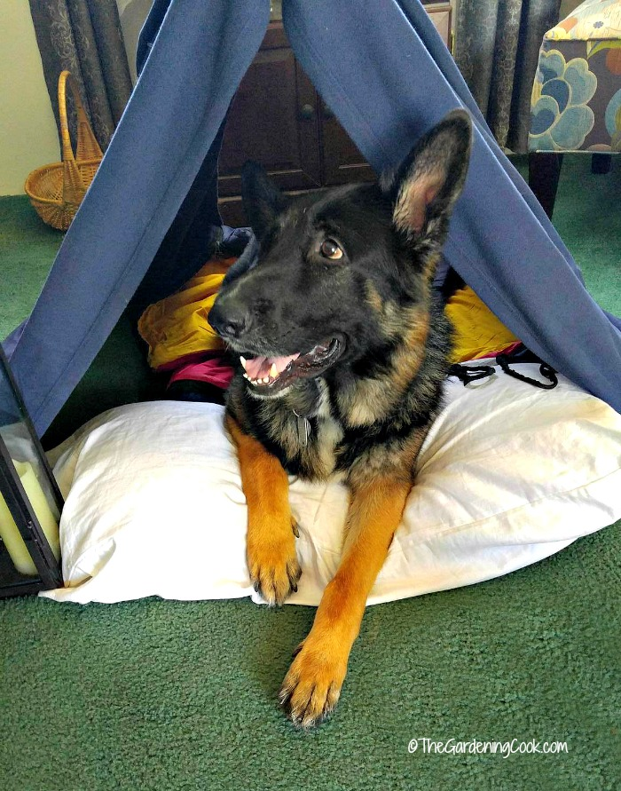 Baron in the tent