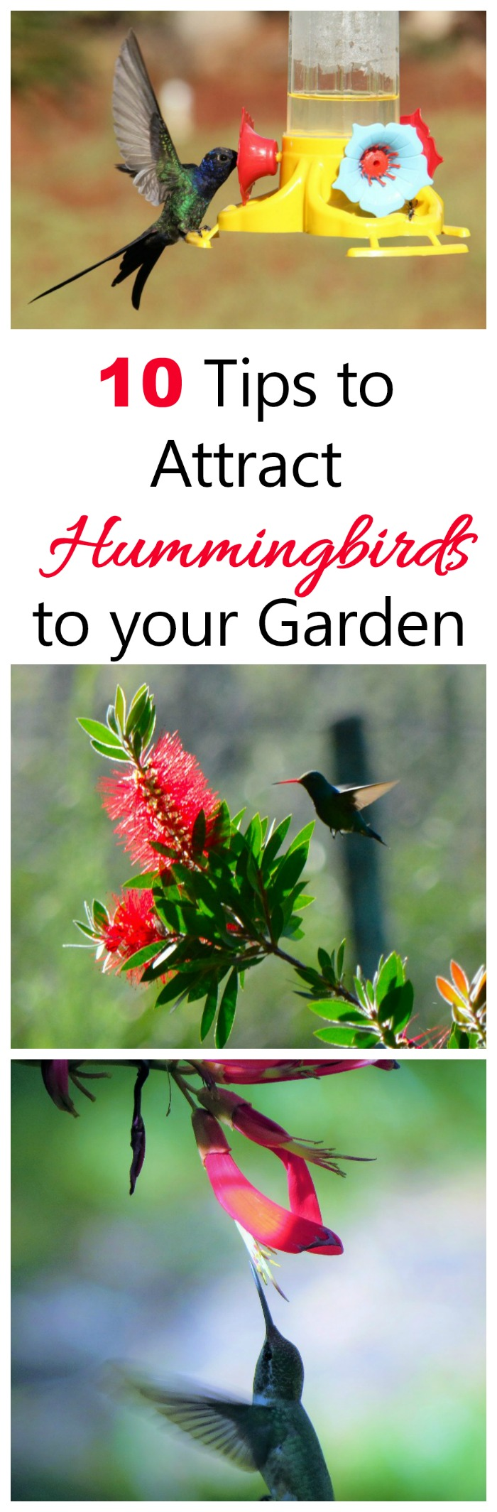 Put These 10 Tips To Use To Attract Hummingbirds To Your Yard And Keep Them  Coming