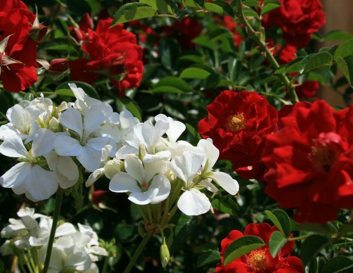 No-Fail plantas para atraer colibríes, mariposas y abejas | El Centro de Horticultura de Delaware