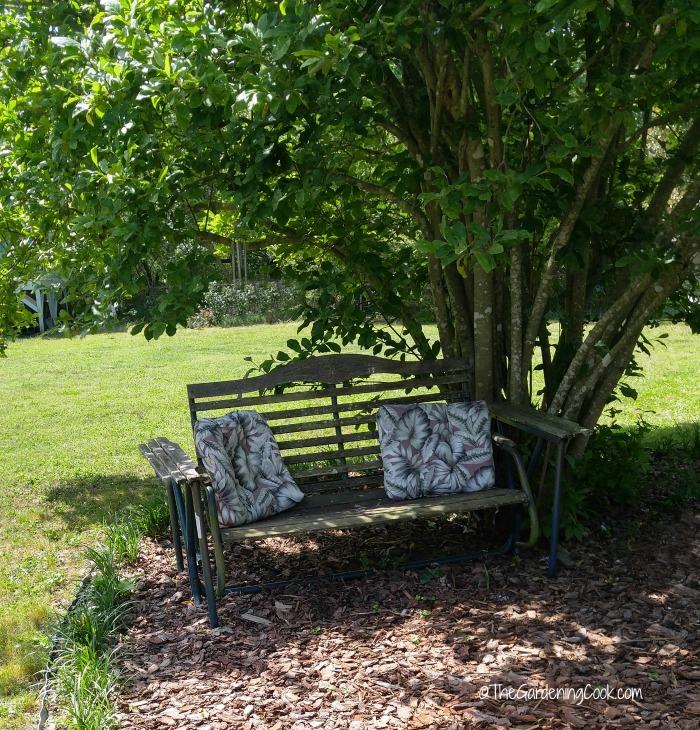 Garden bench slider and magnolia tree