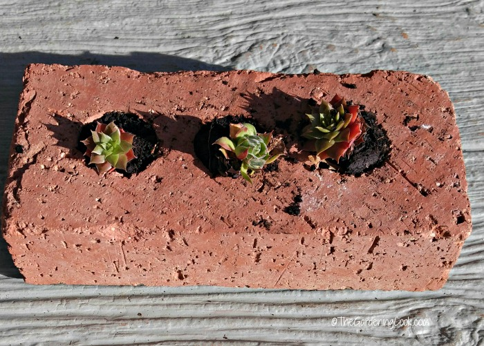 tiny succulents can be planted in so many ways. This cute idea shows a brick with home of the home grown babies in it.